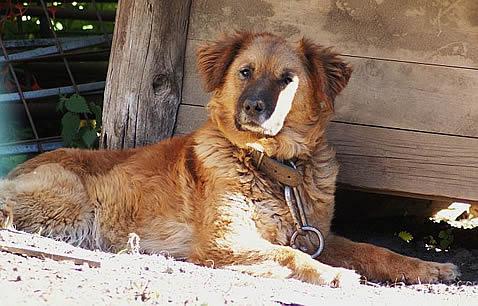Dog Spain.