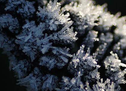 Frosty Italian Kale Winkleigh.