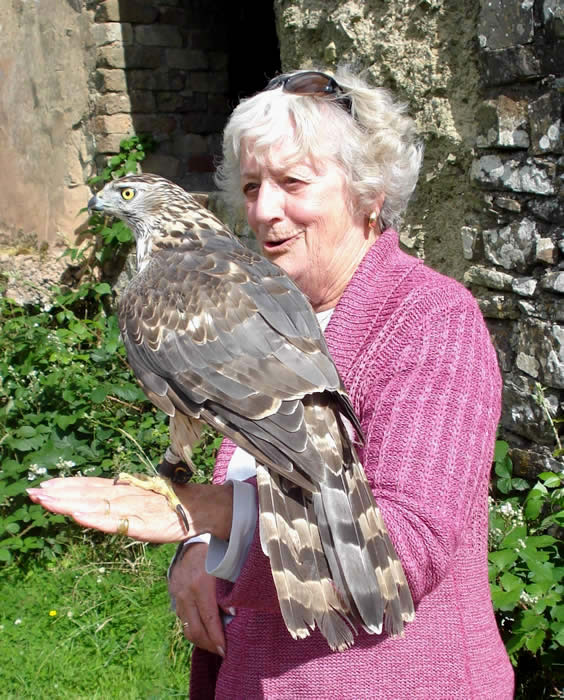 Sheila Stone and hunting Goshawk